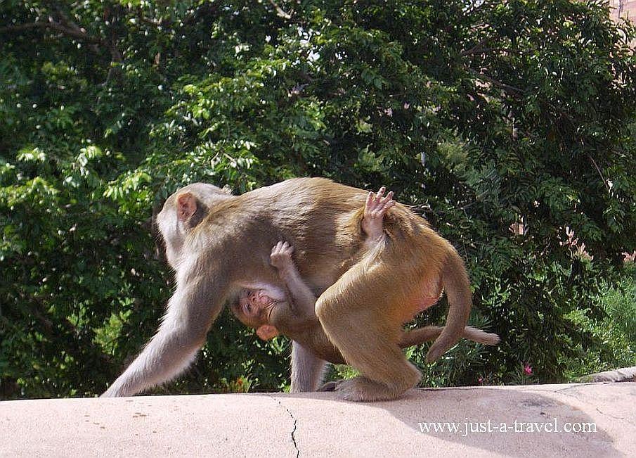 4.malpy  - Zdjęcia z Indii