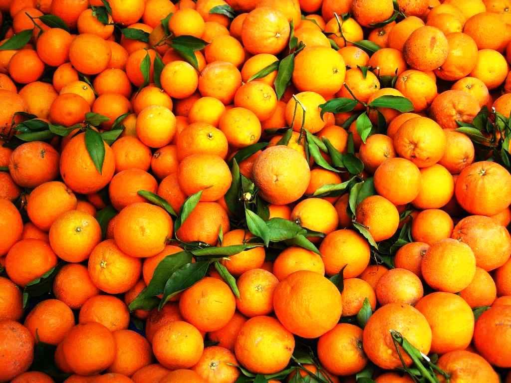 Pomarańcze prosto z drzewa