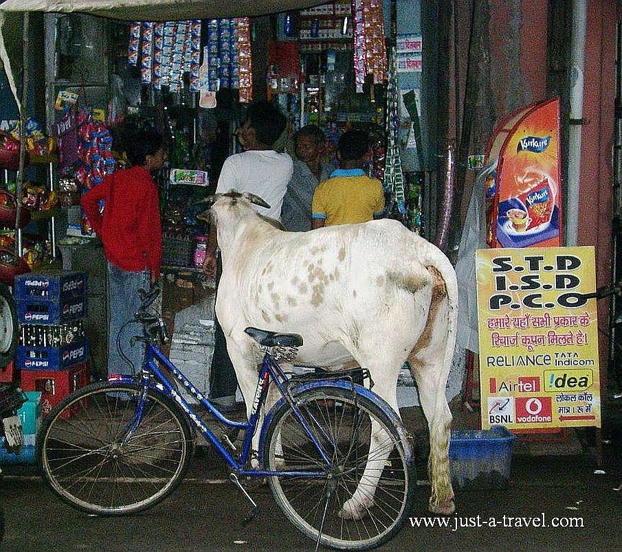 Agra City2 1 - Zdjęcia z Indii