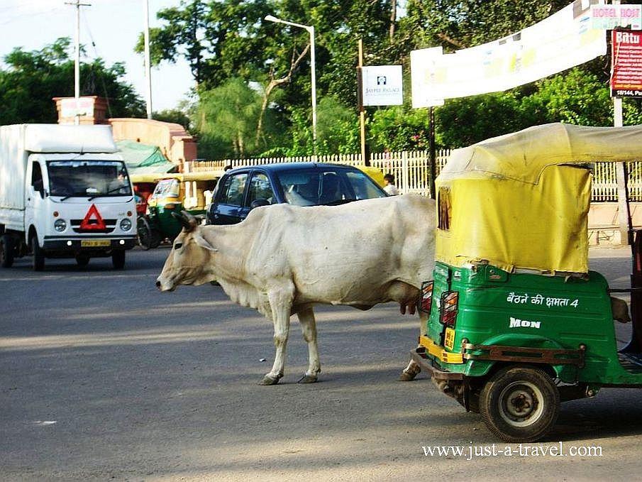 Agra city - Zdjęcia z Indii
