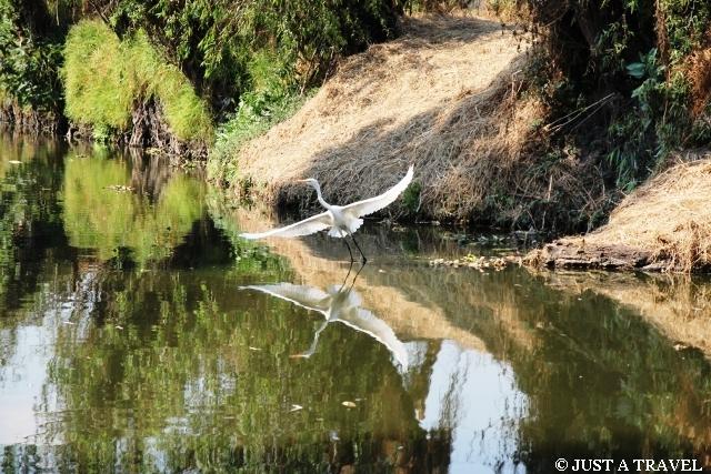 Dziki ptak w Xochimilco