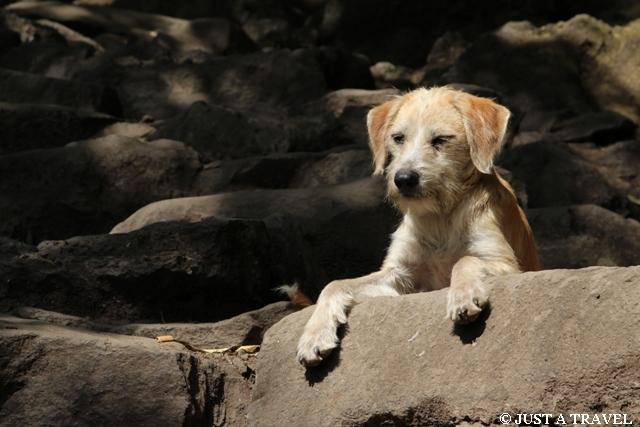 Bezdomny pies w drodze na piramidę Tepozteco w Tepotzlan