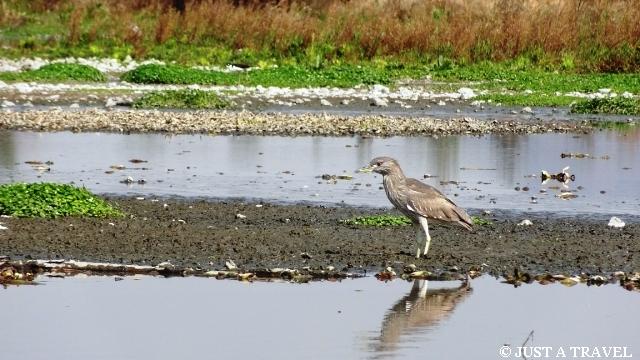 Ptak w Xochimilco