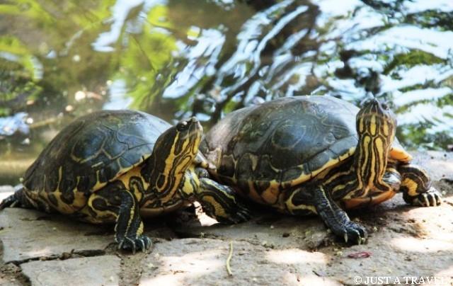 żółwie z Centro Mexicano de la Tortuga