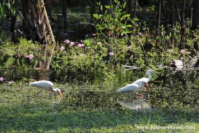 Dzikie ptaki Laguna La Ventanilla