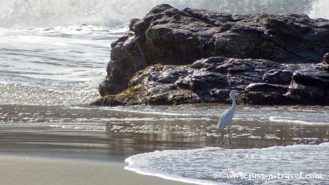 ptak w wodzie