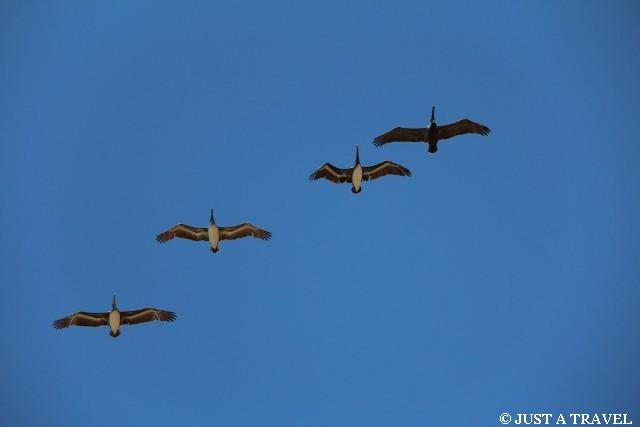Ptaki z Puerto Escondido