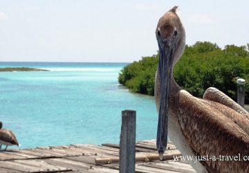 Punta Allen, Jukatan