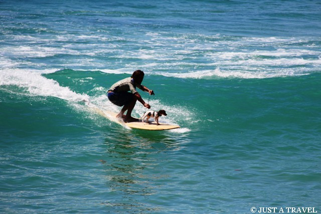 surfing z psem