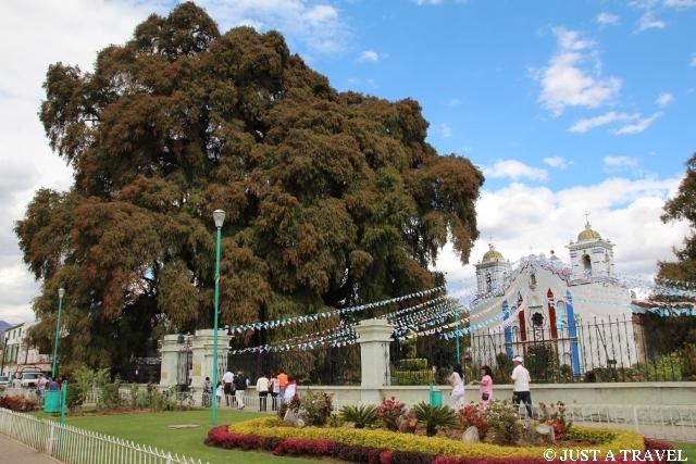 Drzewo Moktezumy w Tule