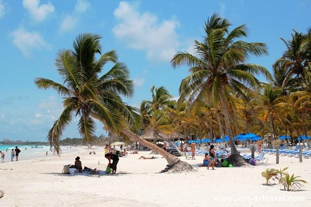 palmowy las na playa maya