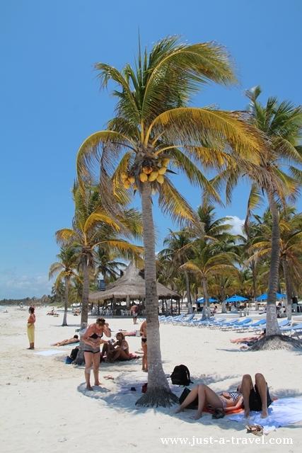 palmy na plaży playa maya w tulum