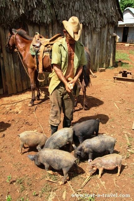 kubański rolnik