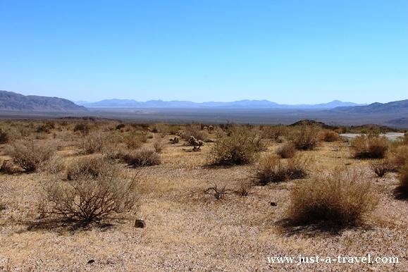 Pustynia Sonora