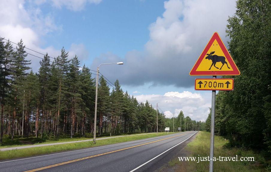 Uwaga renifer - Podróż dookoła Skandynawii