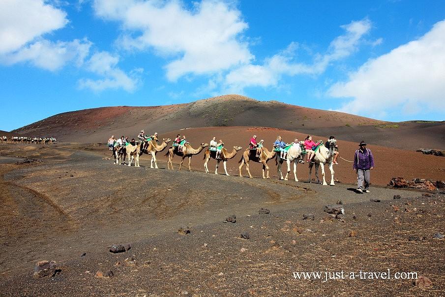 Los Camellos na wyspie Lanzarote