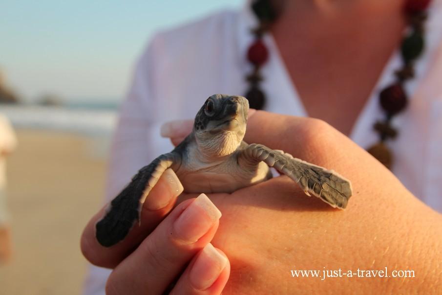 Chrzciny żółwia