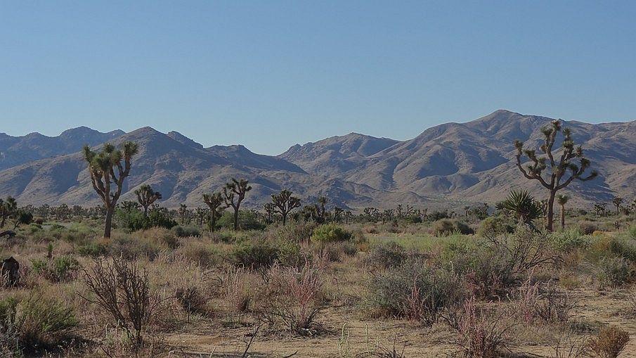 Najpiękniejsze parki narodowe USA, Joshua Tree