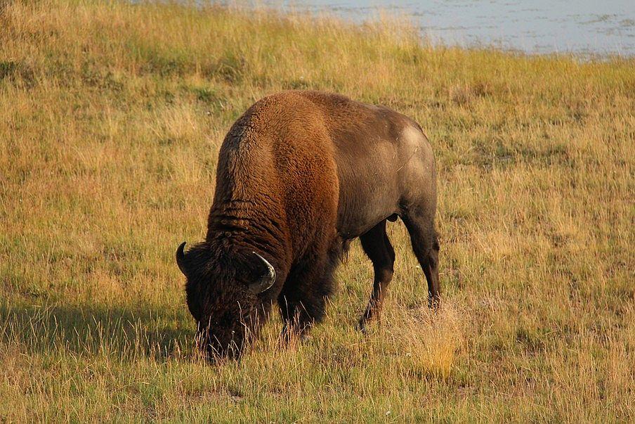 Najpiękniejsze parki narodowe USA, Yellowstone