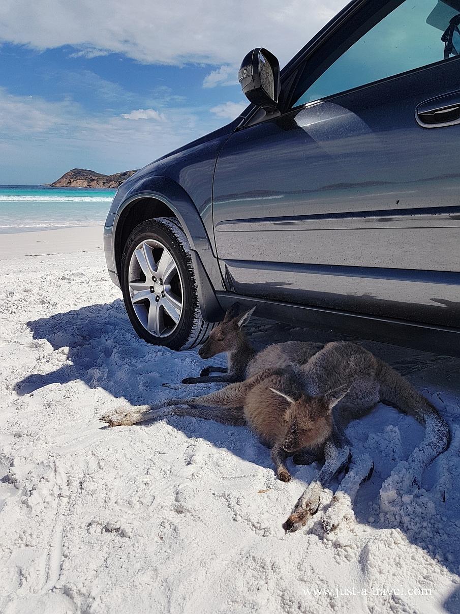 Najpiękniejsze kempingi w Australii Lucky Bay beach
