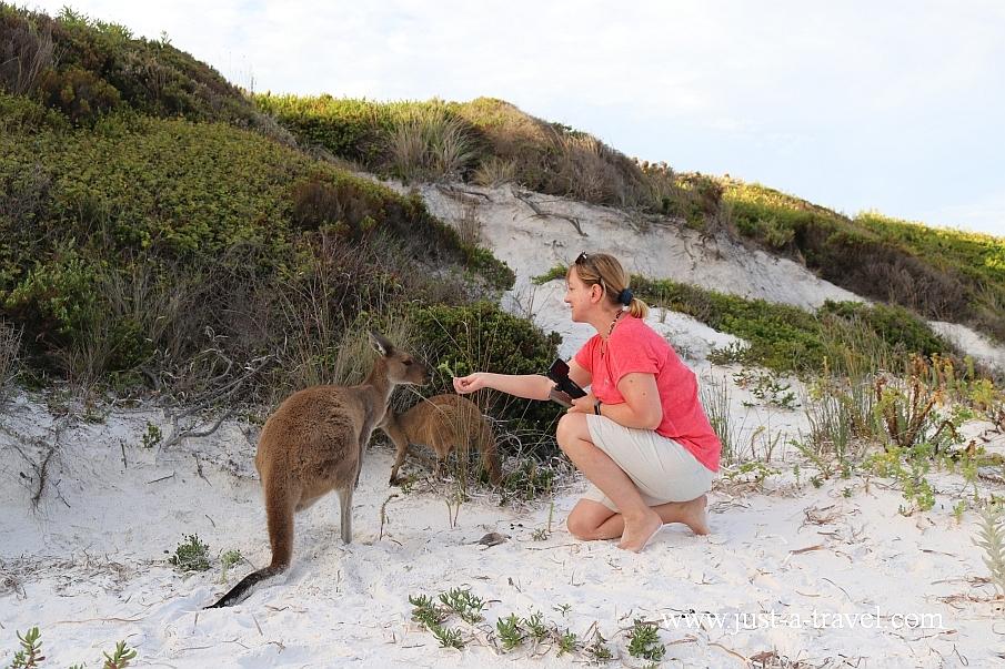 Kangurek z Lucky Bay