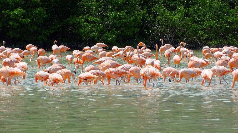Co warto zobaczyć na Jukatanie, Celestun