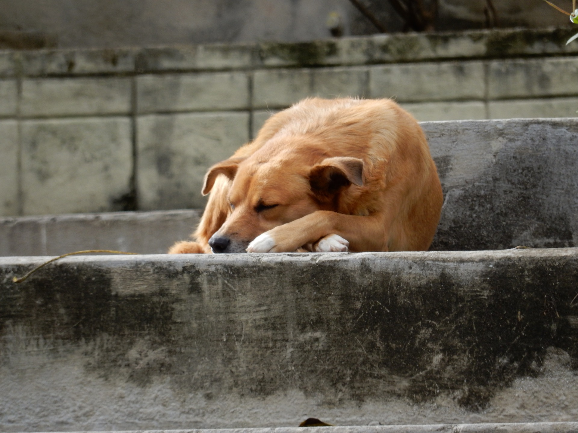 bezpański pies i wścieklizna