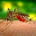 Groźne choroby tropikalne, które możesz przywieźć z wakacji