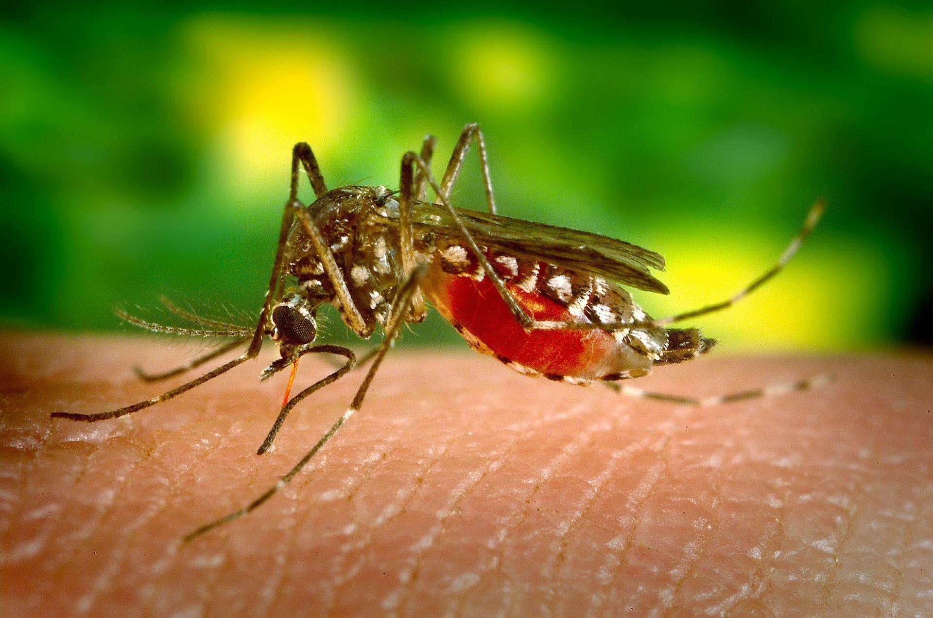 choroby tropikalne przenoszone przez komary